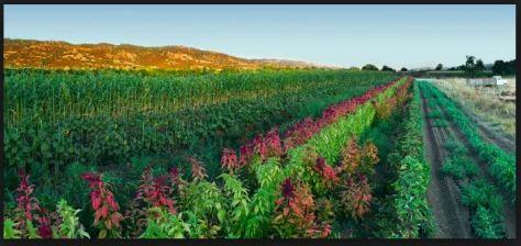 crop diversity.JPG