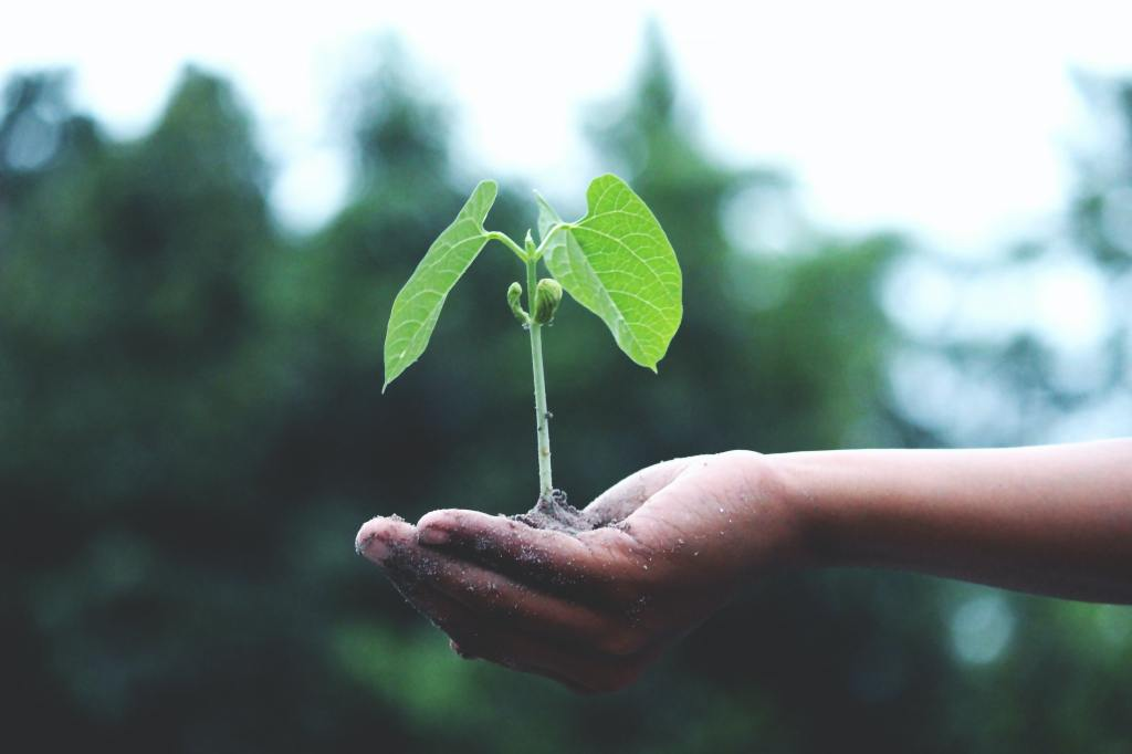 A plant is in a hand.